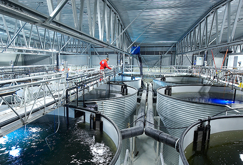 12 000 land raised salmon die in electrical failure for Indoor fish farming