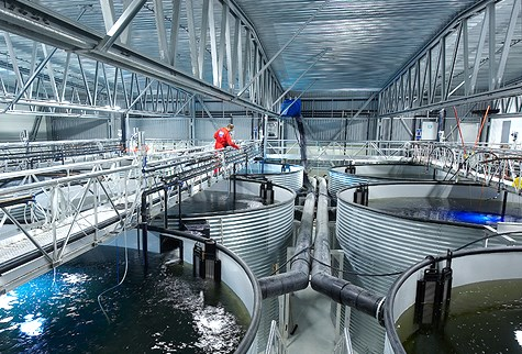 Land Based Aquaculture