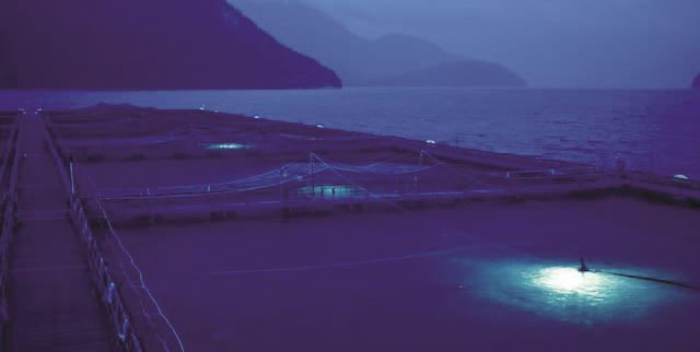 akva group underwater lights aquaculture - blueled has an expected, Reel Combo